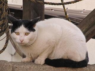 前髪猫.jpg