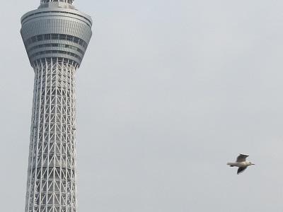 浅草③ 8.jpg