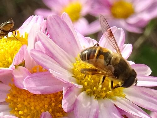 蜂1-2.jpg