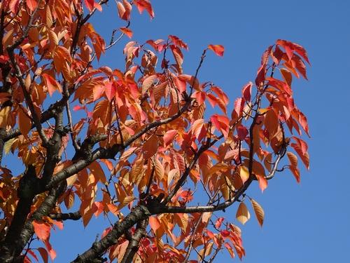 赤い葉2.jpg