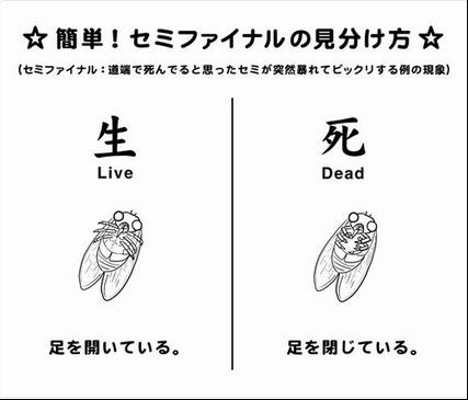 semi 見分け方.jpg